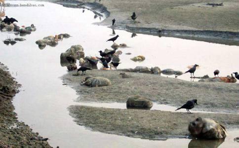 印度为什么会出现那么多恒河浮尸?