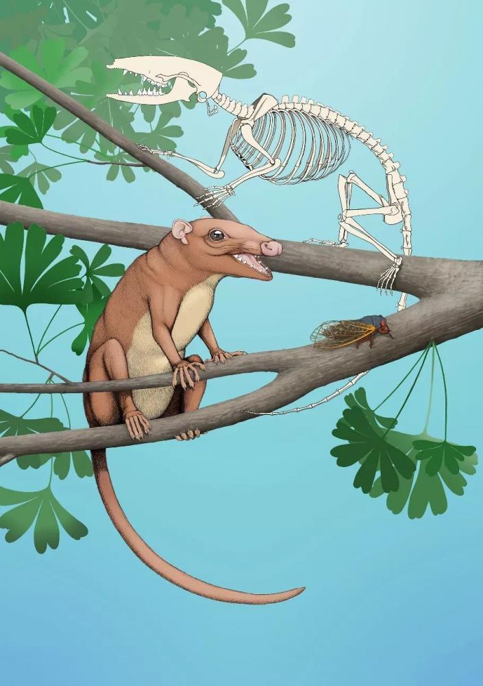 科学家发现混元兽是怎么回事?混元兽是什么兽揭秘