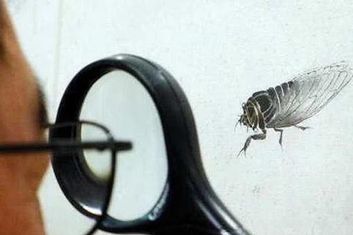齐白石蝉作品为何能拍出天价?齐白石的蝉画赏析