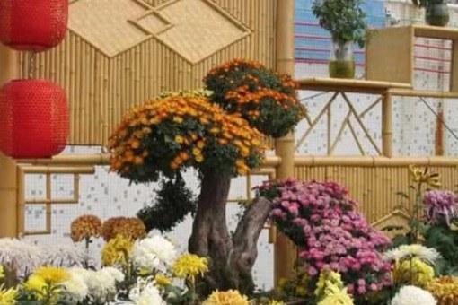 日本为何崇拜菊花和武士刀?菊与刀文化背景解析