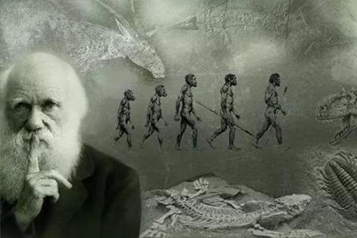猿猴訴訟案的經過是怎樣的?達爾文的進化論竟然被告了