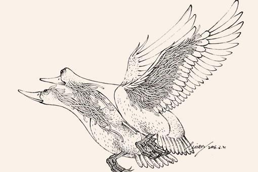比翼鸟指什么鸟?比翼鸟有哪些寓意?