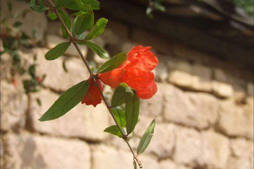 红杏出墙什么意思?有什么历史故事?