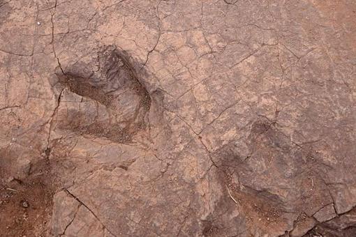 四川发现巨大恐龙足迹是怎么回事